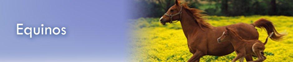 Banner-equinos
